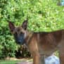 Photo of Lilly D0019
