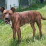 Photo of Skeeter
