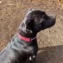 Photo of 🎀 Trixie 🎀