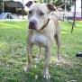 Photo of Ginger 31542 Campbelltown Acf