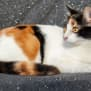 Photo of Renate **2nd Chance Cat Rescue**