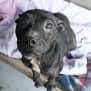 Photo of Foxy 31658 Campbelltown Acf