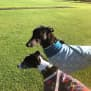 Photo of Buddy