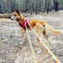 Photo of Esker   Dingo X