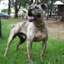 Photo of Angus 31700 Campbelltown Acf