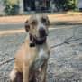 Photo of Goldie