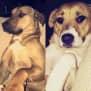 Photo of Buddy And Lola Db502 & Db503