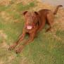 Photo of Bo