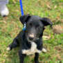 Photo of Thunder ~ $150 Adoption Fee ~