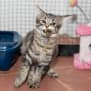 Photo of Raya   Visit Me At Cat Whispurr Cafe Fremantle!