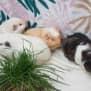 Photo of Silvia (Buddies With Mango, Tubbykins, & Spootle)