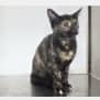 Photo of Urgent Cat Carers Needed!!