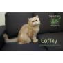 Photo of Coffey  Special Needs