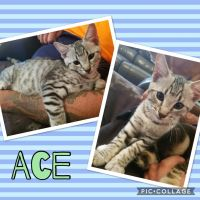 Photo of Ace