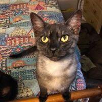 Photo of Grumpy Cat