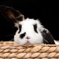 Photo of 🐰🐰Panda (And Possum!)