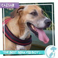 Photo of Caesar