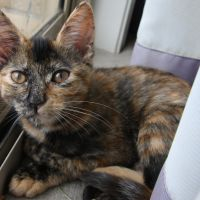 Photo of Caramel (Located In Lyndhurst)