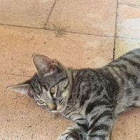 Photo of Tora
