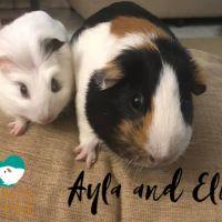 Photo of Ayla And Elio