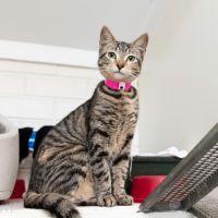 Photo of Tabitha (5282)