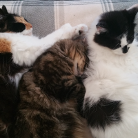 Photo of Nina, Charlotte & Lily