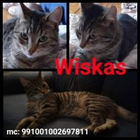 Photo of Wiskas