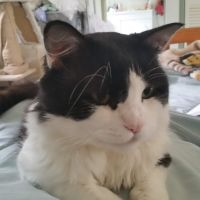 Photo of Smudge
