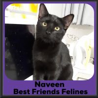 Photo of Naveen