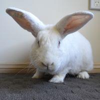 Photo of Herbie