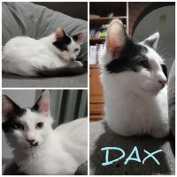 Photo of Dax