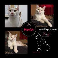 Photo of Hamish