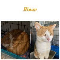 Photo of Blaze