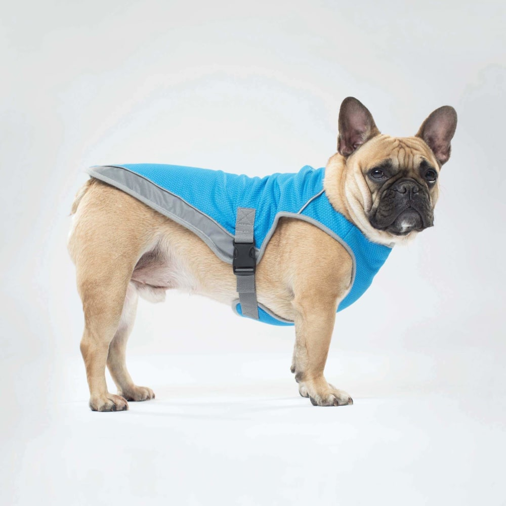 Canada Pooch - Chill Seeker  Cooling Vest