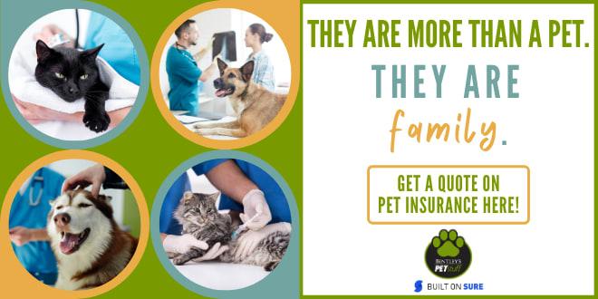 Natural Dog and Cat Food, Treats, Toys   Free Shipping at