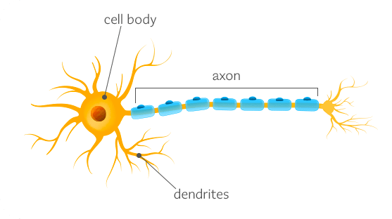 Neuron_structure_teaser.png