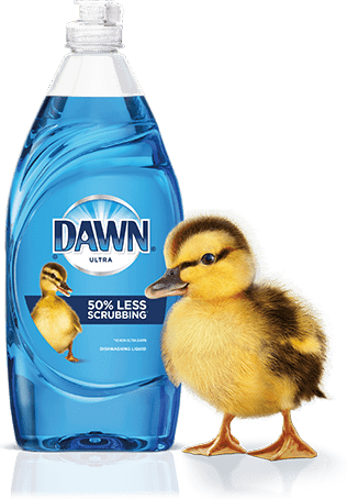 Dawn Dish soap and duck