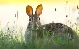 Big Ears Image