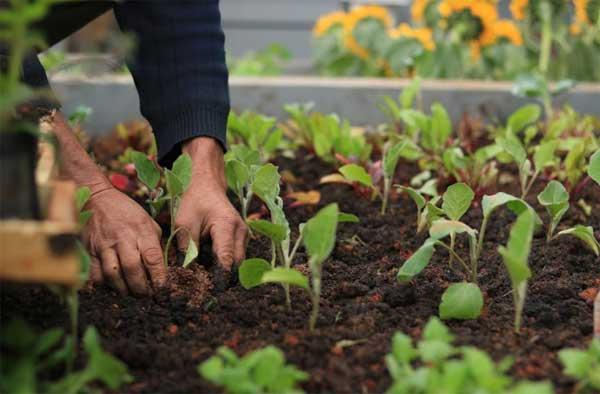 Sesc Paulista reinaugura sua horta