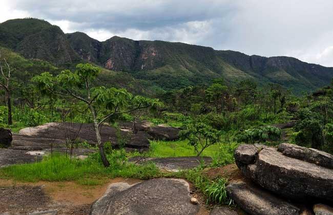 Primarismo grosseiro sobre reflorestamento
