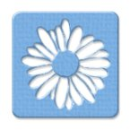 Picture for category Daisies