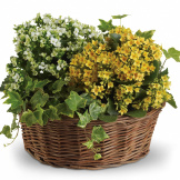 Basket of Joy (Standard)