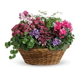 Simply Chic Mixed Plant Basket (Standard)