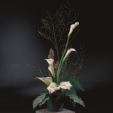 White Calla Lily Sympathy Arrangement
