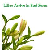 Serene Green™ Bouquet