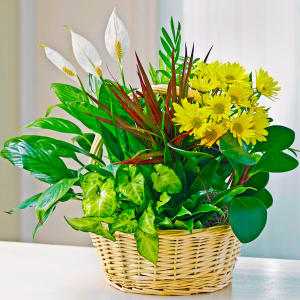 dish garden with fresh cut flowers plants the sympathy store - Dish Garden Plants