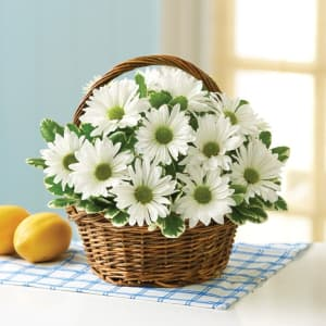 White Daisy Basket