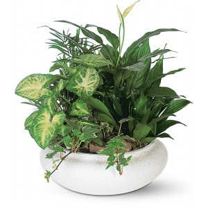 medium dish garden - Dish Garden Plants
