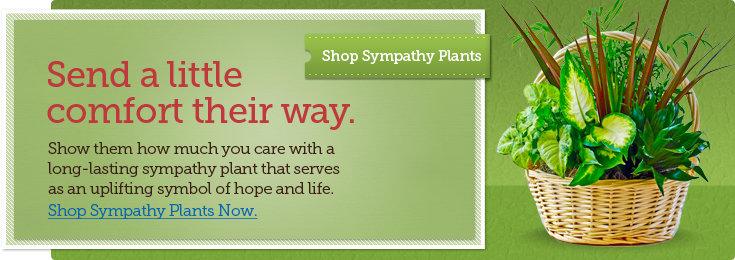 Shop Plants