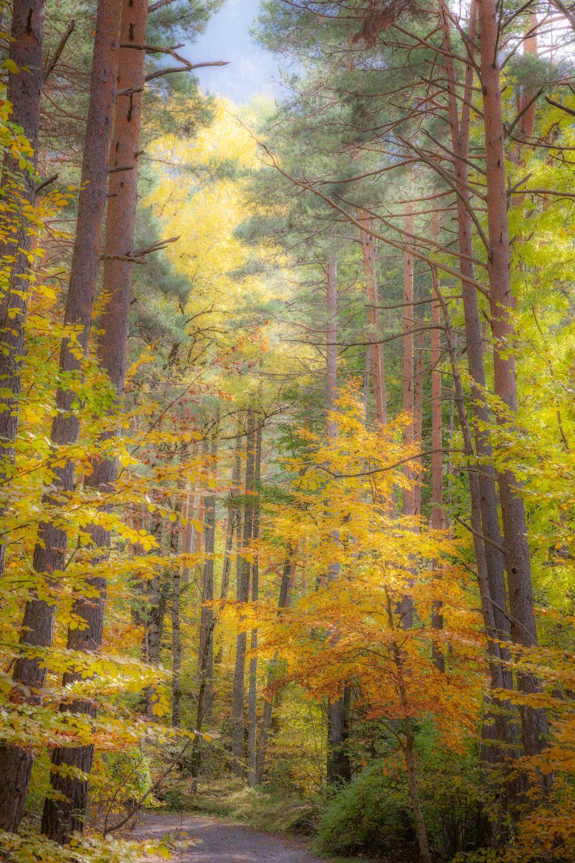 Photographier les couleurs d'automne dans les Pyrénées